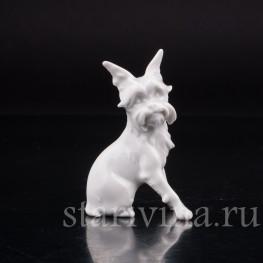 Фарфоровая статуэтка собаки Гриффон, миниатюра, Augarten Wien, Австрия, сер. 20 века.